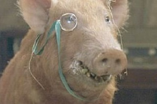 https://static.tvtropes.org/pmwiki/pub/images/squealer_of_animal_farm.jpg