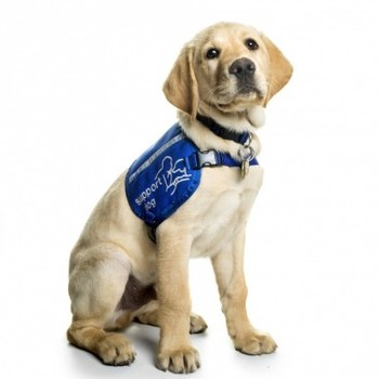 http://static.tvtropes.org/pmwiki/pub/images/supportdogs_0033_368x368.jpg