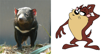 http://static.tvtropes.org/pmwiki/pub/images/tasmanian-devil_funny-animal-anatomy_7894.png