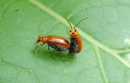 http://static.tvtropes.org/pmwiki/pub/images/the-cutest-picture-of-bugs-having-sex-youll-ever--17825-1279316075-3_642.jpg