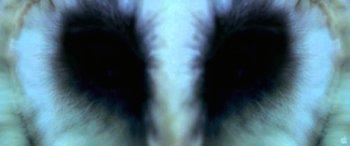 http://static.tvtropes.org/pmwiki/pub/images/the_fourth_kind.jpg