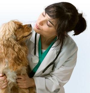 https://static.tvtropes.org/pmwiki/pub/images/veterinarian-3_2101.jpg