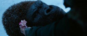 https://static.tvtropes.org/pmwiki/pub/images/war_for_the_planet_of_the_apes_tearjerker_8.jpg