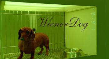 https://static.tvtropes.org/pmwiki/pub/images/wiener_dog.jpg