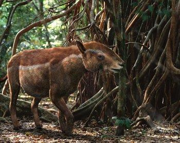 https://static.tvtropes.org/pmwiki/pub/images/wwb_propalaeotherium.jpg