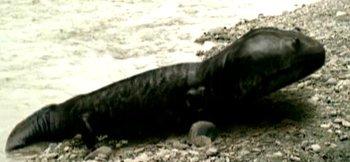 http://static.tvtropes.org/pmwiki/pub/images/wwd_koolasuchus.jpg