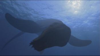 https://static.tvtropes.org/pmwiki/pub/images/wwd_plesiopleurodon.jpg