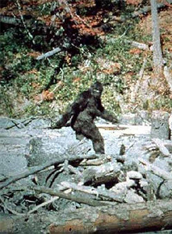 Image result for Sasquatch